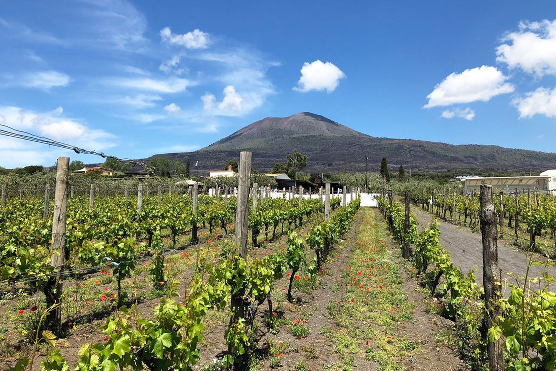 Wine Tasting and Pompeii Tour