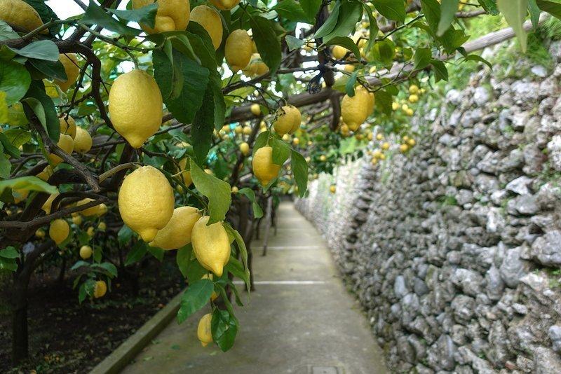 Sentiero dei Limoni, Amalfi Coast